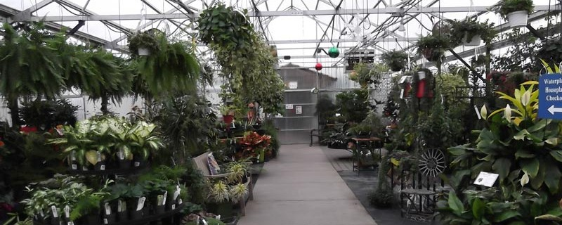 House Plants Eugene Johnson Brothers Greenhouses
