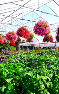 Hanging Baskets For Sale