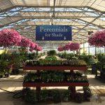 Perennials For Shade