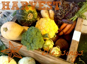 Fall Veggies 2PM