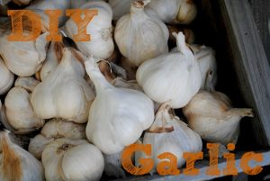 Garlic PM