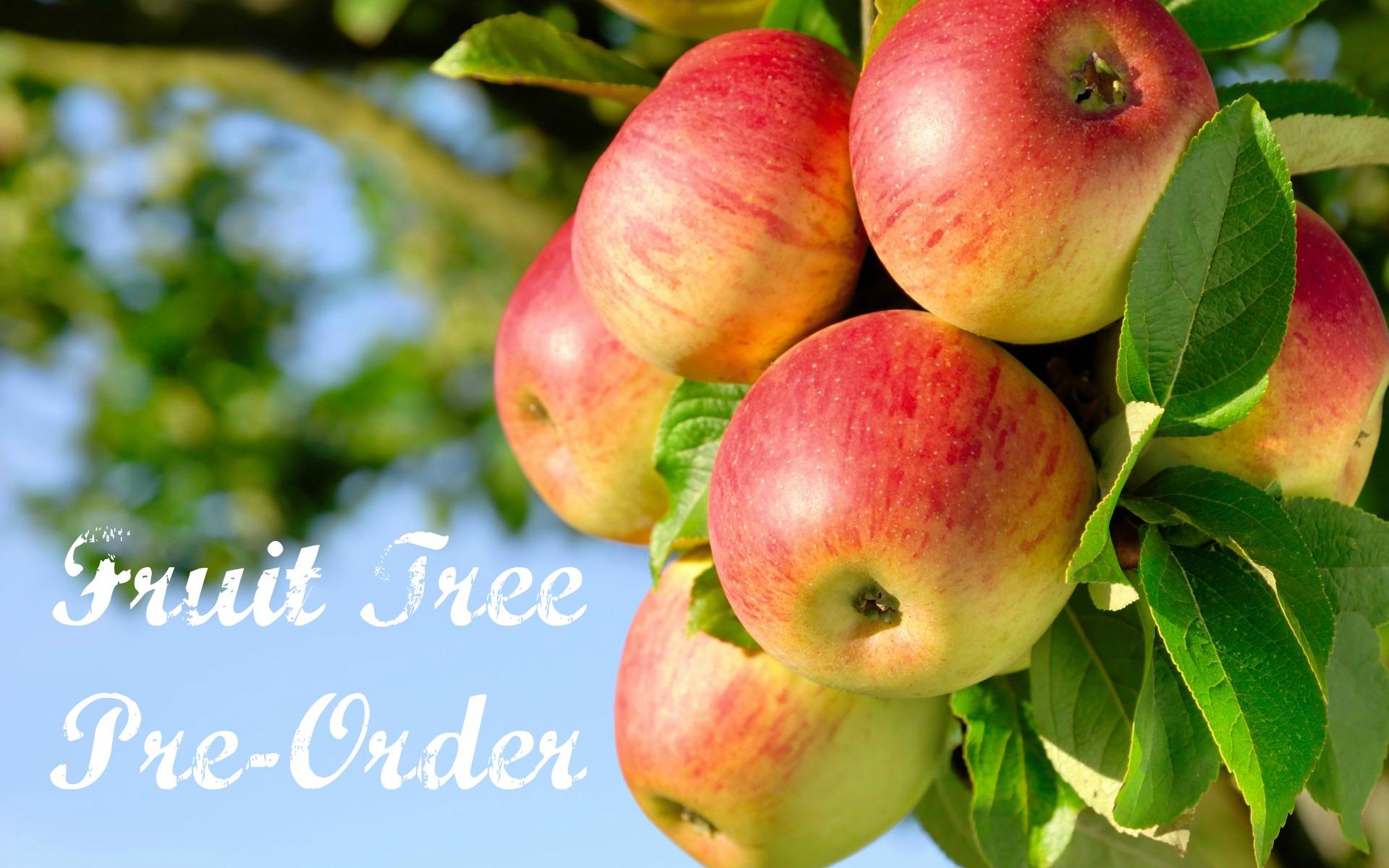 fruit tree pre order